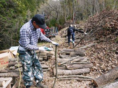 わが家のきのこ狩り!おうちで原木しいたけ栽培 その1_a0254656_1815518.jpg