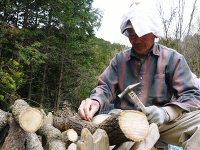 わが家のきのこ狩り!おうちで原木しいたけ栽培 その1_a0254656_18192182.jpg