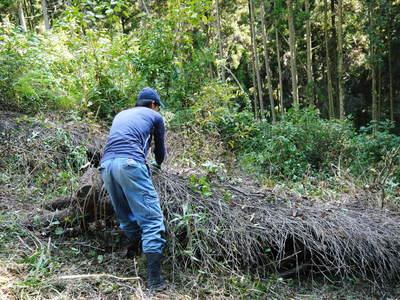 わが家のきのこ狩り!おうちで原木しいたけ栽培 その1_a0254656_184828100.jpg