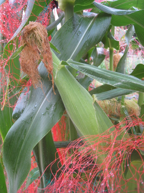収穫物で色々と調理実習~_e0121558_2347898.jpg