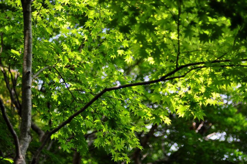 京都らしい風景_e0053660_21251990.jpg
