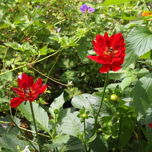 初夏のお庭③_a0292194_1820885.jpg