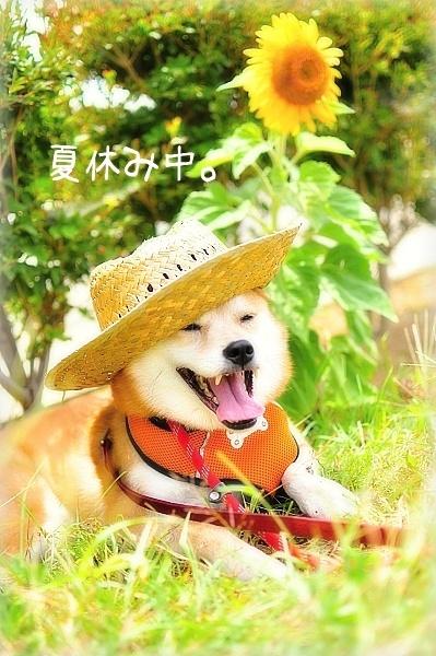 夏休みです。_e0005411_9113595.jpg