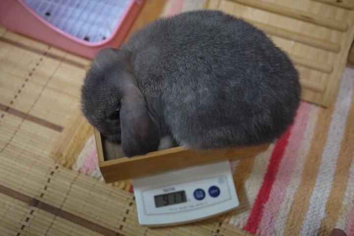 今週の体重測定_a0268412_22463446.jpg