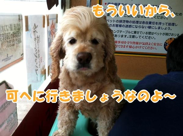 b0067012_1455653.jpg