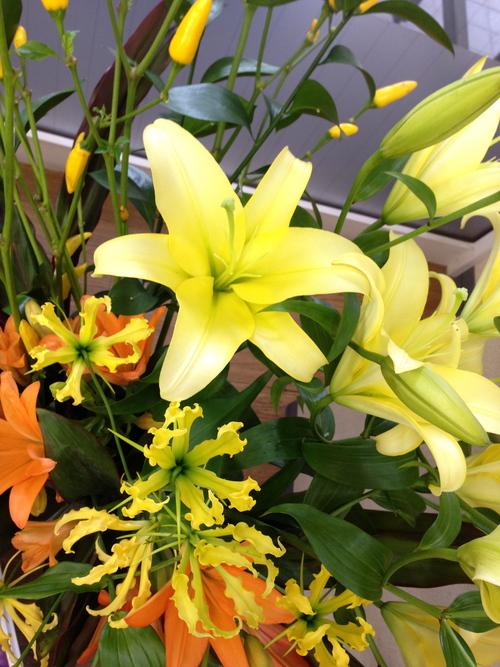今週のお花とセール情報_a0200423_1962936.jpg
