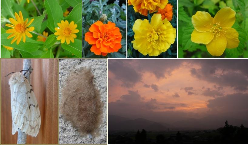 オレンジの花たちと噂の蛾_a0212730_2145630.jpg