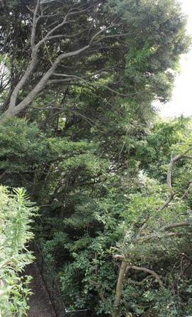 「緑豊かな高台に建つ二世帯住宅」周囲の環境によって素材を選びます_f0170331_18163437.jpg