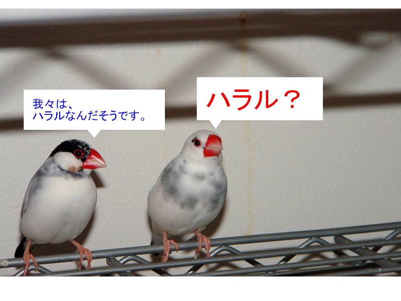 a0019545_2004997.jpg