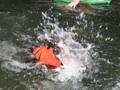 ジニーと福豆の初泳ぎ_e0270846_16464148.jpg