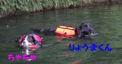 ジニーと福豆の初泳ぎ_e0270846_17141888.jpg