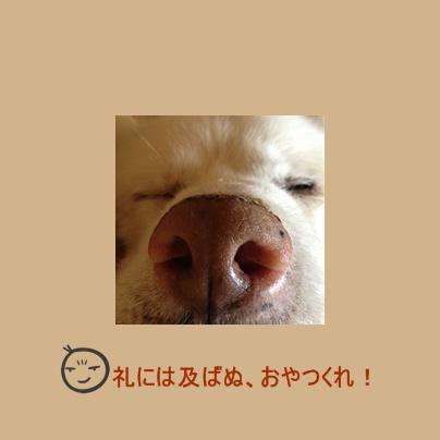 a0187087_1593821.jpg