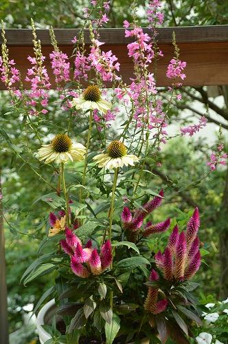 いただきものの 夏の花々_c0124100_13434722.jpg