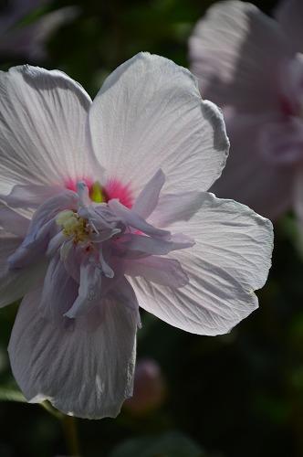 いただきものの 夏の花々_c0124100_13443450.jpg