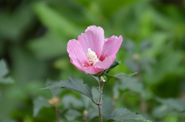 いただきものの 夏の花々_c0124100_13444798.jpg