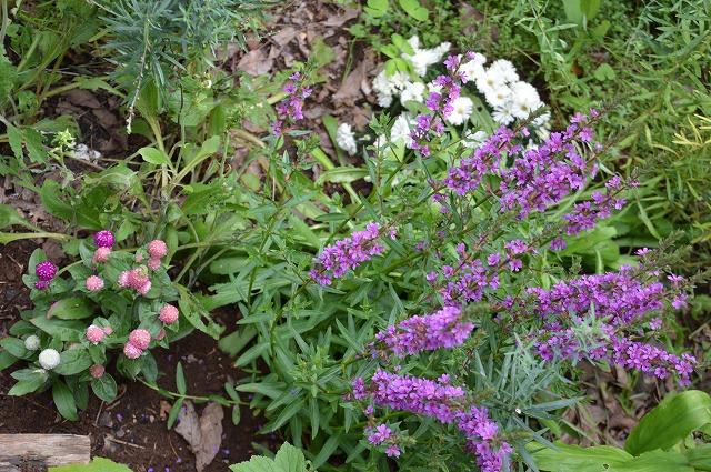 いただきものの 夏の花々_c0124100_1345180.jpg