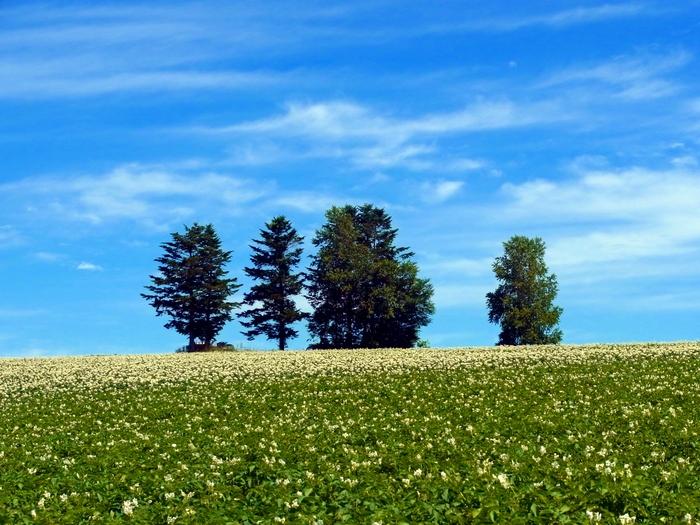 北海道、就実の丘へ_d0116009_119472.jpg