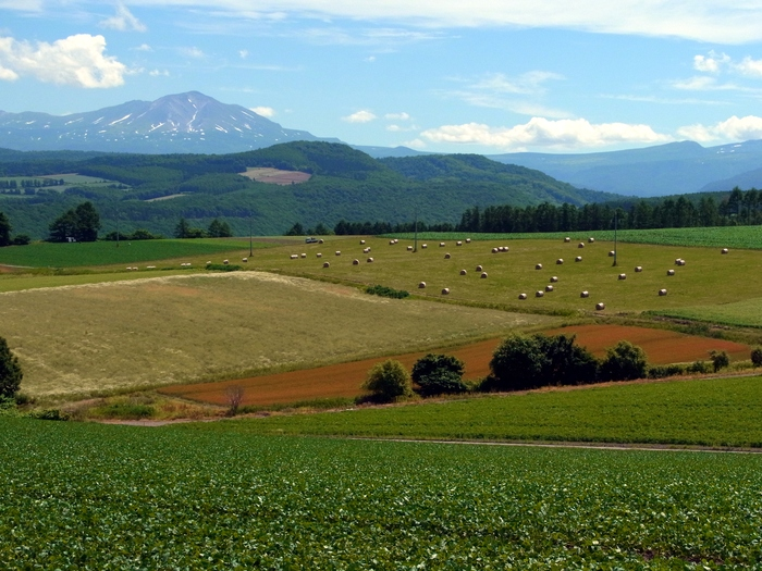 北海道、就実の丘へ_d0116009_1242729.jpg