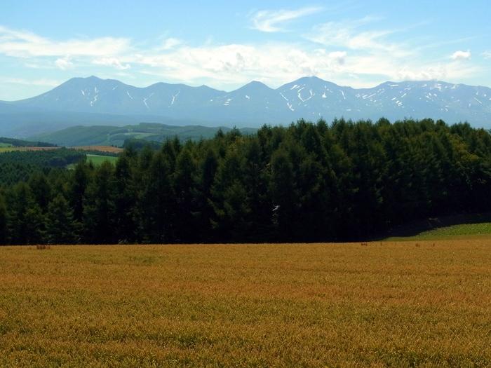 北海道、就実の丘へ_d0116009_1312526.jpg