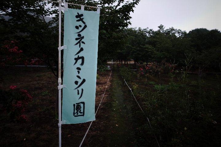 キツネノカミソリ_a0268412_20241567.jpg