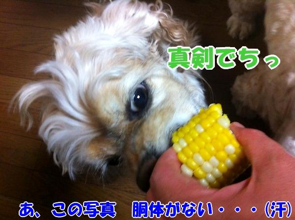 b0067012_12464072.jpg