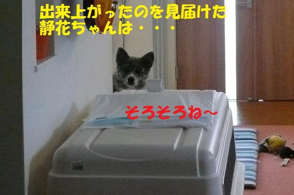f0121712_151939.jpg
