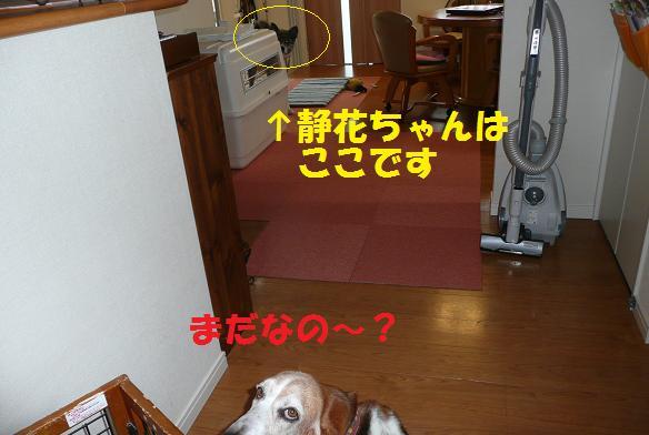 f0121712_1575313.jpg
