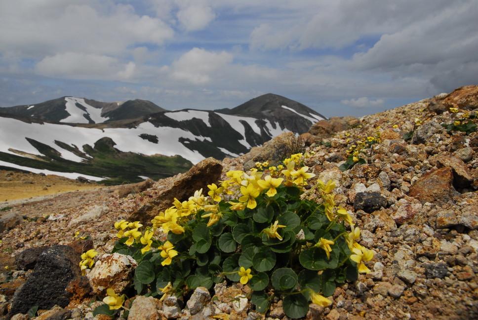 2013年7月 July 2013 大雪トムラウシ山系縦走 Trekking in Taisetsu (Tomurausi) Mountains_c0219616_14413346.jpg