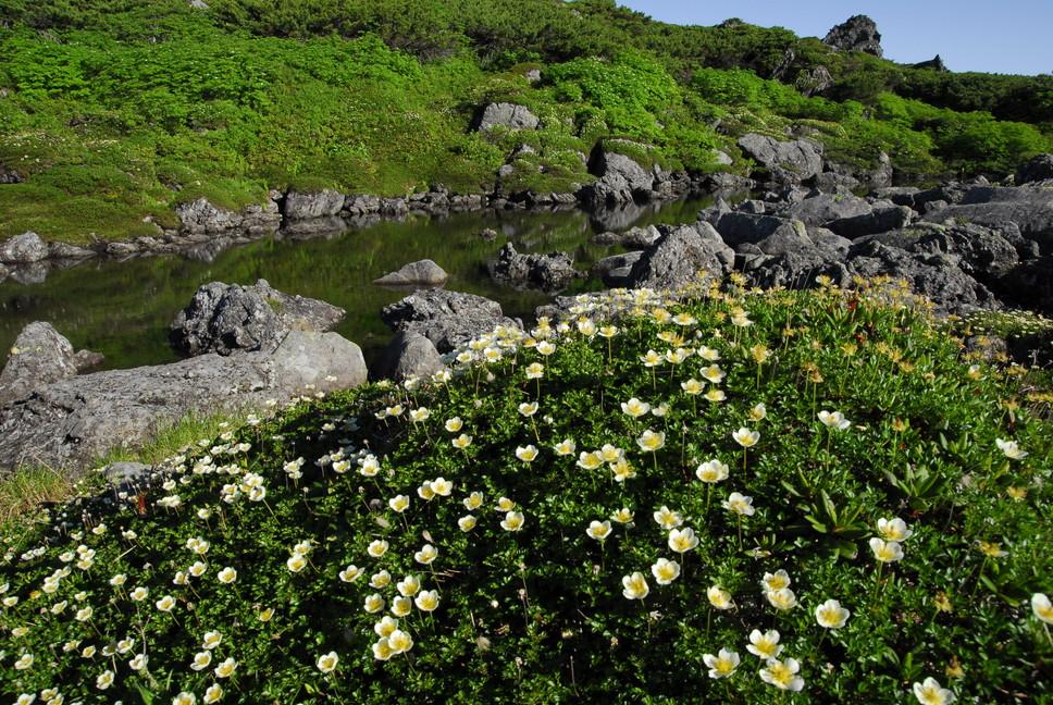 2013年7月 July 2013 大雪トムラウシ山系縦走 Trekking in Taisetsu (Tomurausi) Mountains_c0219616_15245538.jpg