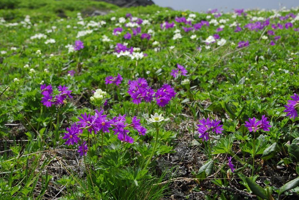2013年7月 July 2013 大雪トムラウシ山系縦走 Trekking in Taisetsu (Tomurausi) Mountains_c0219616_15552234.jpg