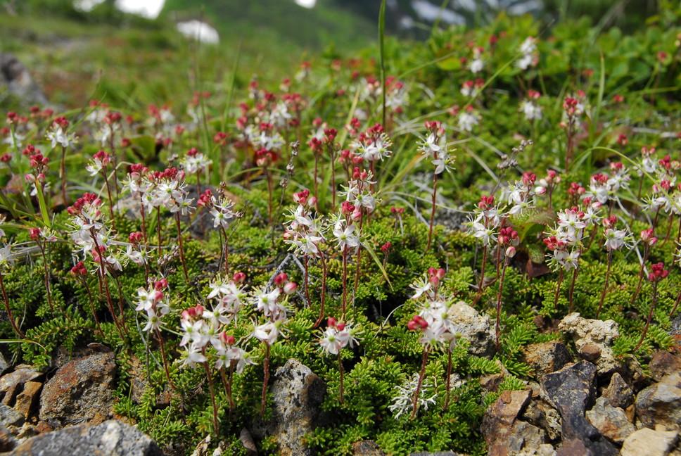 2013年7月 July 2013 大雪トムラウシ山系縦走 Trekking in Taisetsu (Tomurausi) Mountains_c0219616_1575066.jpg