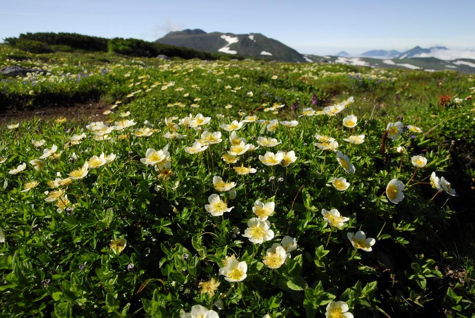 2013年7月 July 2013 大雪トムラウシ山系縦走 Trekking in Taisetsu (Tomurausi) Mountains_c0219616_16948.jpg