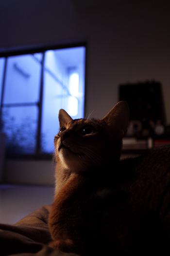 [猫的]夕方の光+トロメオ直接光_e0090124_0232213.jpg