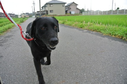 07/30 お散歩_e0236430_055370.jpg