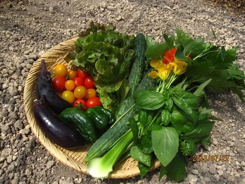 夏野菜☆。・。・_f0231042_22393691.jpg