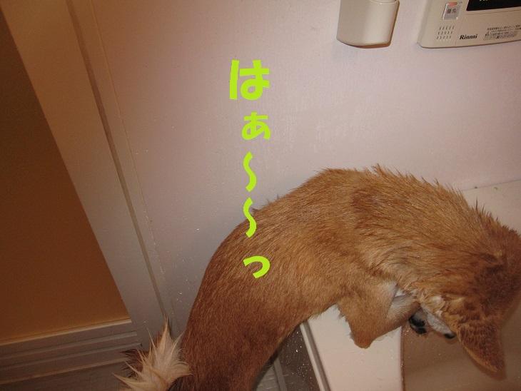 f0245650_7592776.jpg