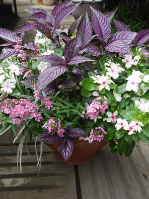 Rose bowlの夏の寄せ植え_d0229351_21373146.jpg
