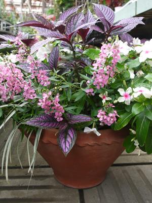 Rose bowlの夏の寄せ植え_d0229351_21381088.jpg