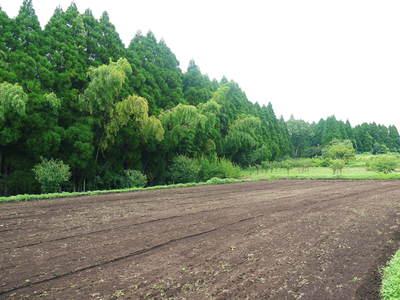 菊池水源里山ニンジン さぁ!いよいよ種蒔きです!!_a0254656_16192548.jpg