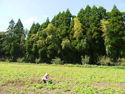 菊池水源里山ニンジン さぁ!いよいよ種蒔きです!!_a0254656_16542293.jpg