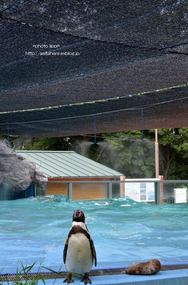 ペンギンのイルカジャンプ♪_b0024758_1154210.jpg