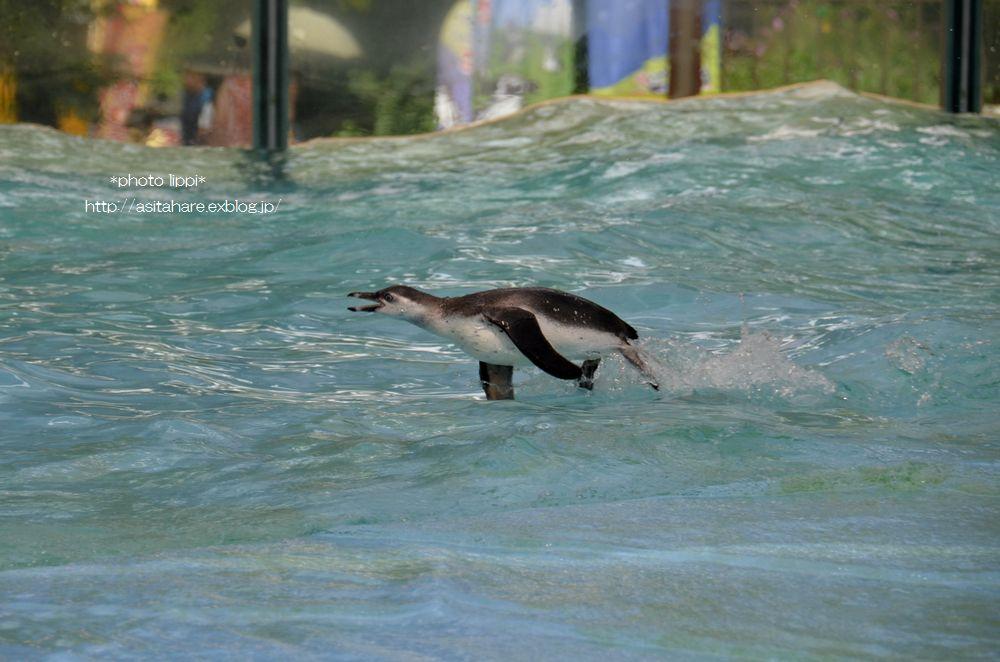 ペンギンのイルカジャンプ♪_b0024758_18399.jpg