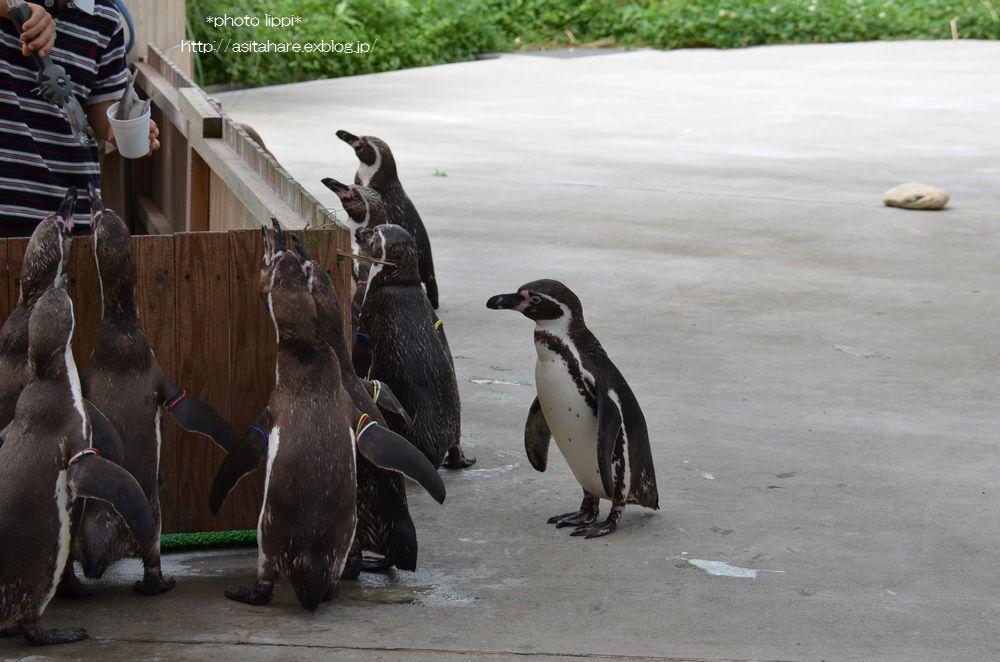 ペンギンのランチタイムとペンペン_b0024758_23111443.jpg