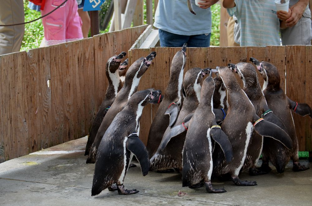 ペンギンのランチタイムとペンペン_b0024758_23115316.jpg