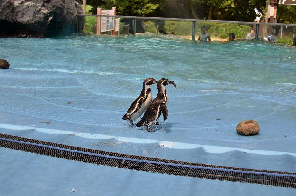 ペンギンのランチタイムとペンペン_b0024758_23124749.jpg