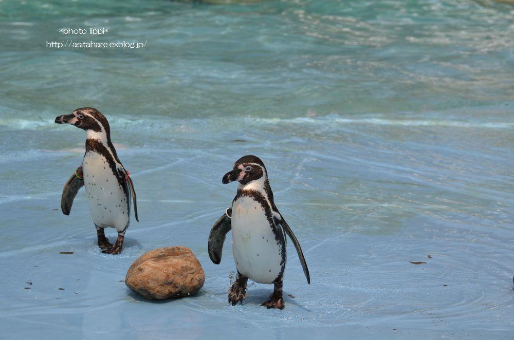 ペンギンのランチタイムとペンペン_b0024758_23131491.jpg