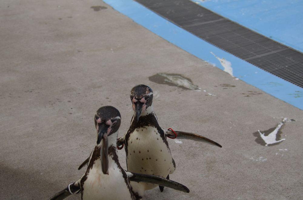 ペンギンのランチタイムとペンペン_b0024758_231453.jpg