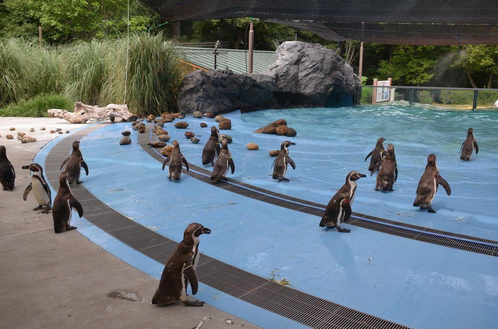 ペンギンのランチタイムとペンペン_b0024758_2316049.jpg