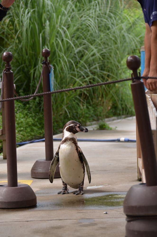 ペンギンのランチタイムとペンペン_b0024758_2318837.jpg