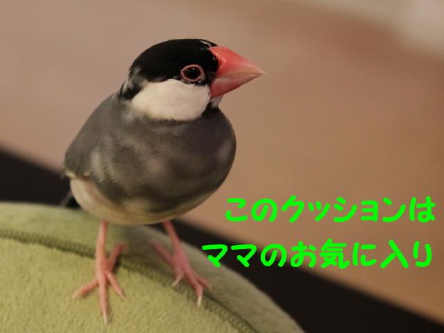 b0158061_22253666.jpg